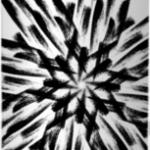 pinrose-campfire-rebel